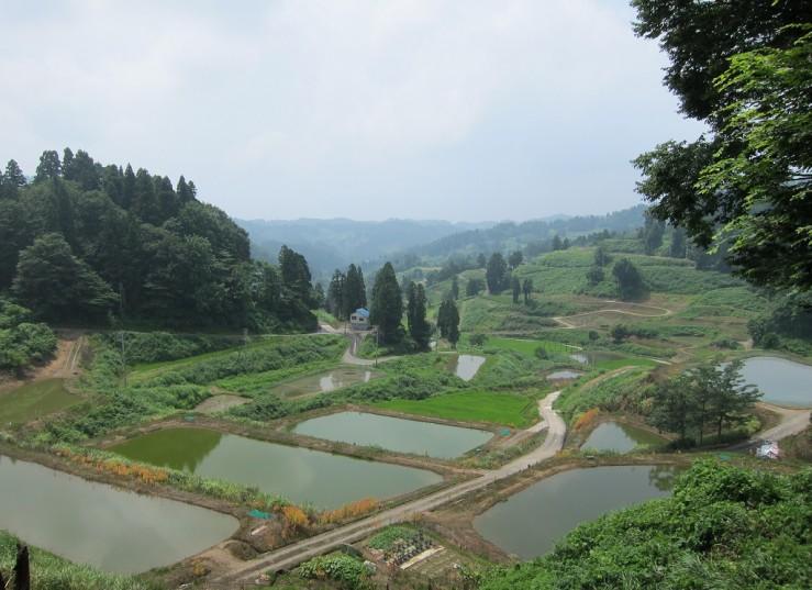 Uitzicht over mudponds bij Marujyu