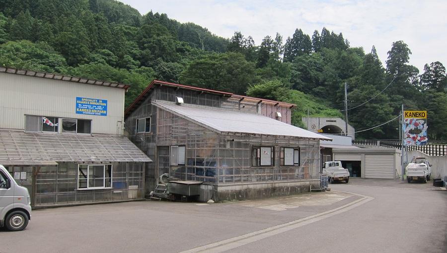 Koihuis Kaneko Koi Farm
