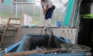 Sanke Senbetsu op de Oya Koi Farm