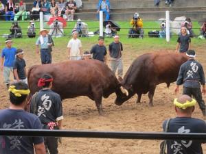 Stierengevechten