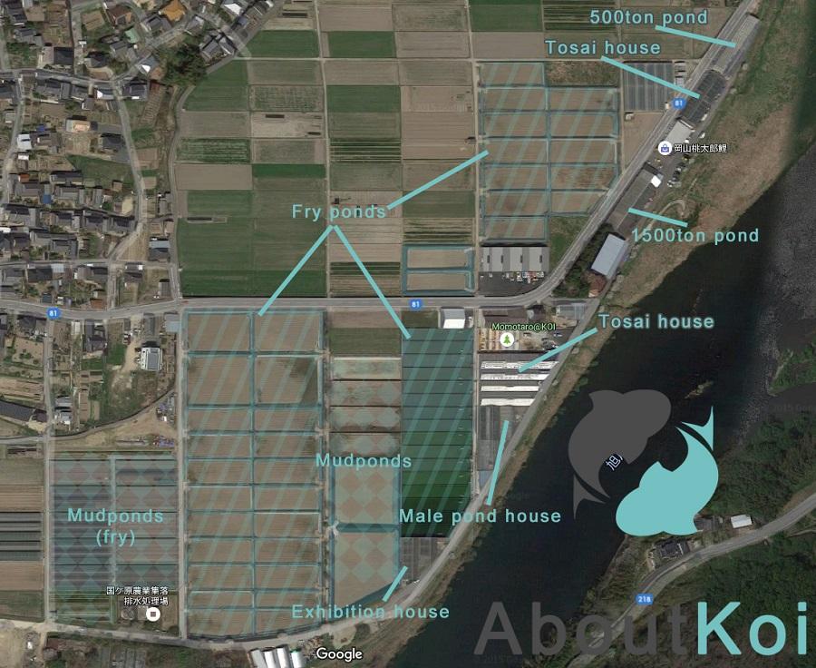 Overzicht Momotaro Koi Farm
