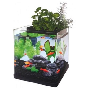 Superfish aquarium aquaponics 23