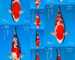 Sakai Fish Farm Auction op 28 februari 2018