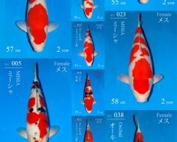Sakai Fish Farm Auction op 28 februari 2018