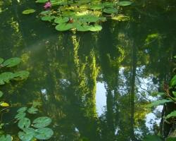 Zweefalgen bestrijden: Groene vijver weer helder maken