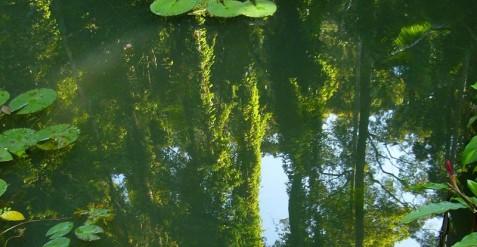 Groene vijver weer helder maken: zweefalgen bestrijden