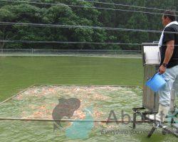 Vissen voeren tijdens vakantie en vakantievoer voor vissen
