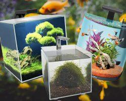 Beste Nano aquarium kiezen, welke zijn het meest geschikt?