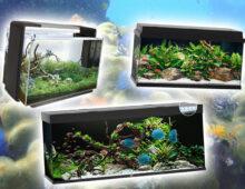 Beste aquarium kiezen: de complete gids (2020)