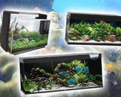Beste aquarium kiezen: de complete gids (2021)